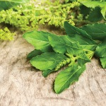 Adaptogenic Herbs: What Are Adaptogens?