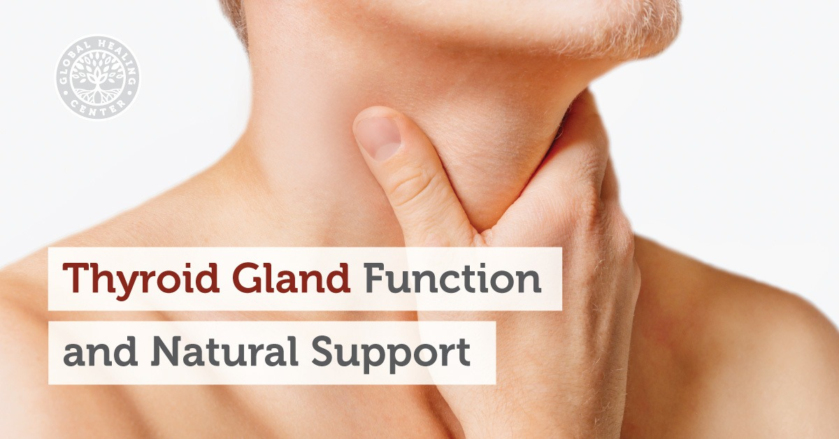 Thyroid Gland: Functions, Symptoms, Diet, and Natural Support