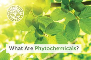 Green leaves on a tree branch. Phytochemicals are chemical compounds produced by plants that can have great health benefits.