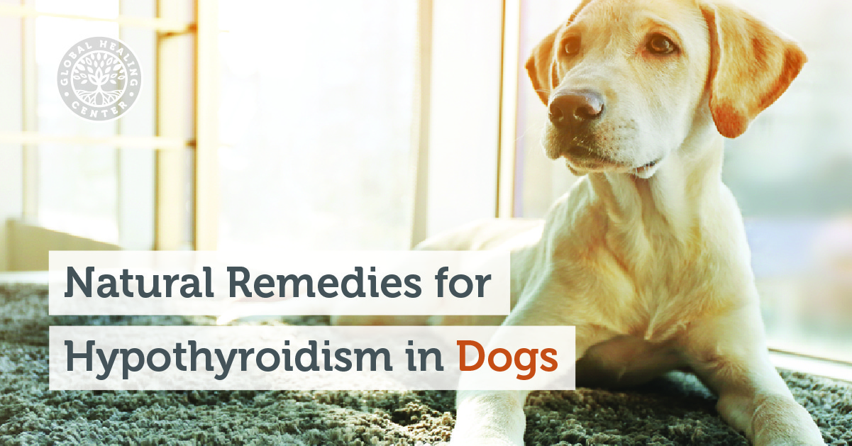natural remedies for hypothyroidism in dogs. Black Bedroom Furniture Sets. Home Design Ideas