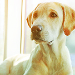 Natural Remedies for Hypothyroidism in Dogs