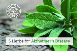 A sage plant. Sage and herbs like ginseng have been studied for their potentially beneficial effect on Alzheimer's disease.