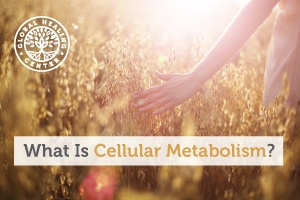 A woman is walking through a sunny field. Cellular metabolism refers to all chemical changes that take place within a cell.