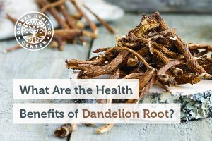 A pile of dandelion root. This root long speculated to have antioxidant activity and hepatoprotective properties.