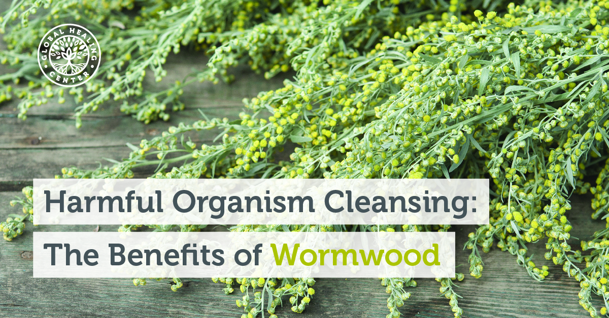 The Benefits Of Wormwood A Harmful Organism Cleanser