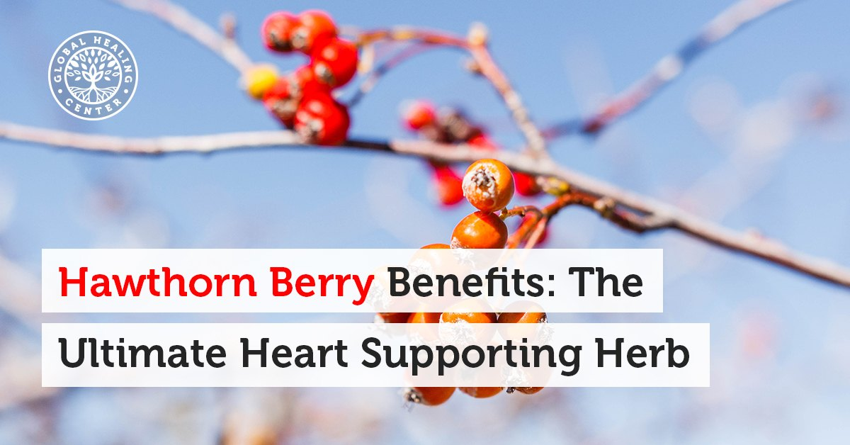 Hawthorn Berry Benefits The Ultimate Heart Supporting Herb
