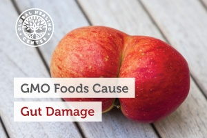Studies show consumption of GMO crops that contain glyphosate can cause gut damage.
