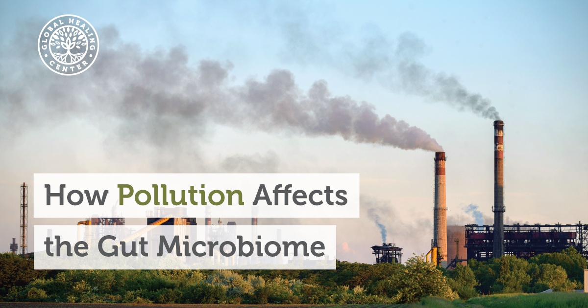 How Pollution Affects The Gut Microbiome