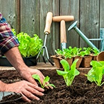 7 Tips for Starting Your Own Organic Garden