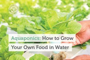 An individual is using an aquaponic system to grow their plant.