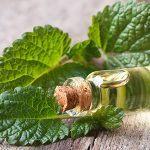 9 Impressive Health Benefits of Lemon Balm