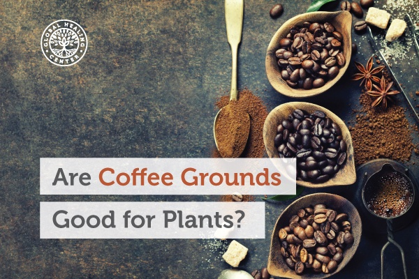 A bowl full of coffee beans. Coffee grounds can be used as a mulching agent