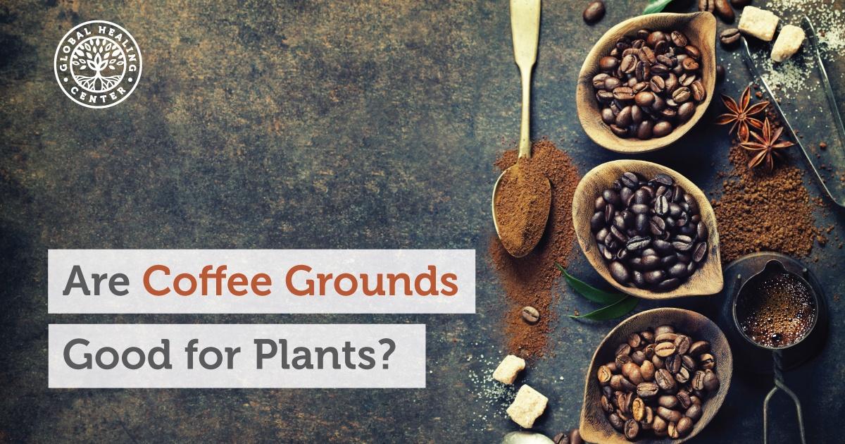 coffee grounds fb Coffee Groundsas Fertilizer