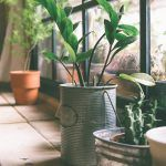 5 Simple Tips for Going 'Green' Inside Your Home