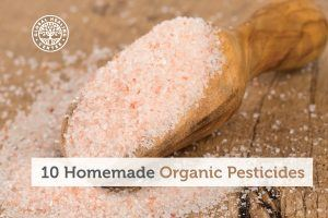 Himalayan crystal salt mixed with warm water is one of the homemade organic pesticides.