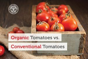 Organic Tomatoes Vs Conventional Tomatoes Global Healing Center