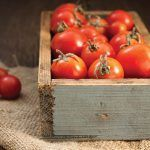 Organic Tomatoes vs. Conventional Tomatoes