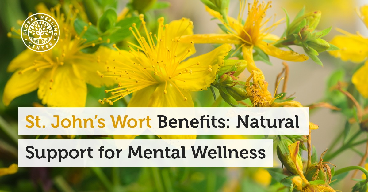 St John S Wort Benefits Natural Support For Mental Wellness