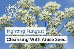 Research has shown that anise seed is toxic to mosquito larvae and also helps protect against candida.