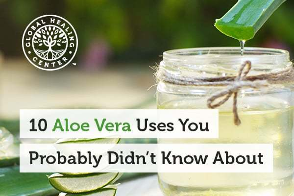 There are many Aloe vera uses such as soothing burns and helping small wounds.