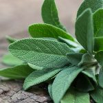 5 Herbs for Alzheimer's Disease