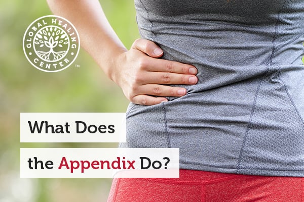 What Does the Appendix Do?