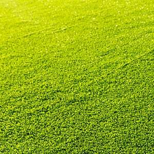 Is Artificial Turf Safe?