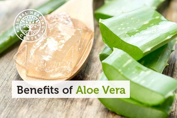 Vitamins and Minerals Are Among the Many Benefits of Aloe Vera.