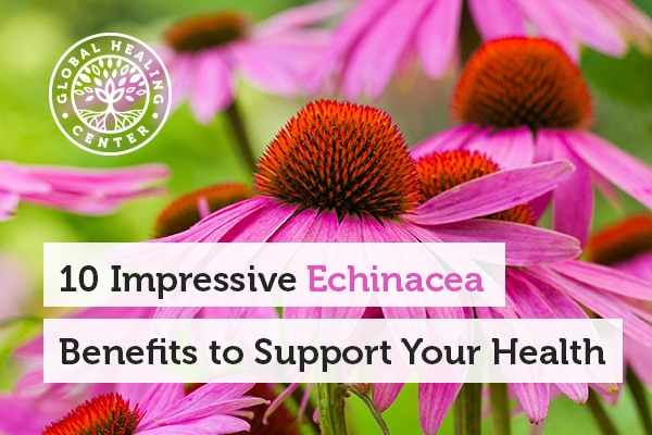 An echinacea plant. Get the benefits of echinacea from teas or supplements.