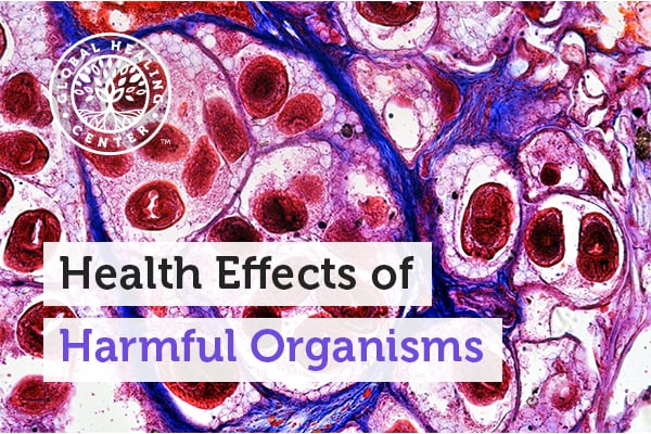 A microscopic view of a harmful organism. Harmful organisms like pinworms can cause sleeping concerns and joint inflammation.