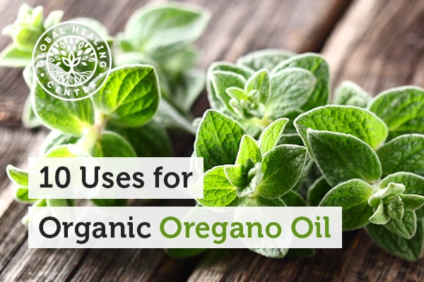 Oregano leaves. Many of the benefits of oregano oil come from a compound called carvacrol.