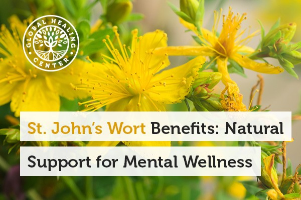 A St. John's Wort plant. Mental wellness is one of the St. John's Wort Benefits