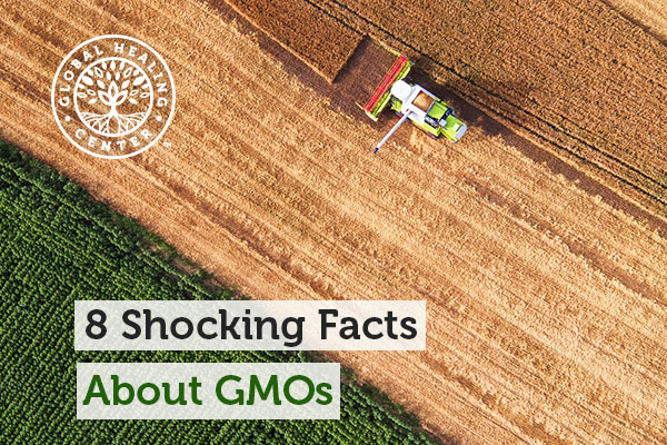 GMOs are produced by multinational corporation called Monsanto.