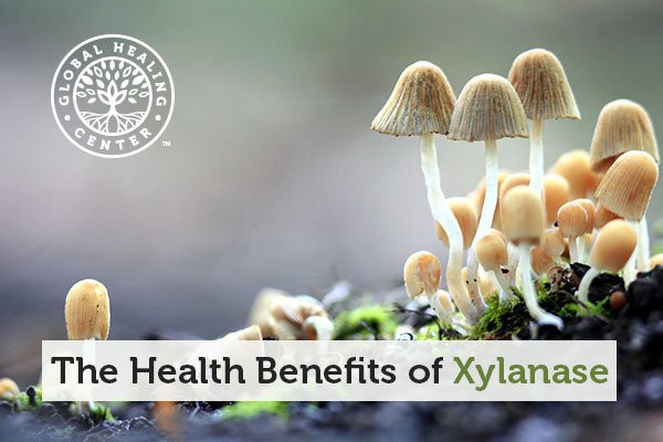 Xylanase is commonly found in microbes and fungi.