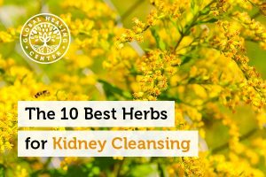 Goldenrod is one of the best herbs for kidney cleansing.