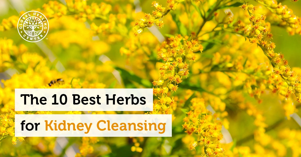 The 10 Best Herbs For Kidney Cleansing