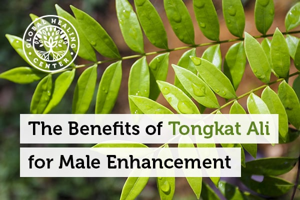 Tongkat Ali was used as an aphrodisiac and considered a therapeutic herb.