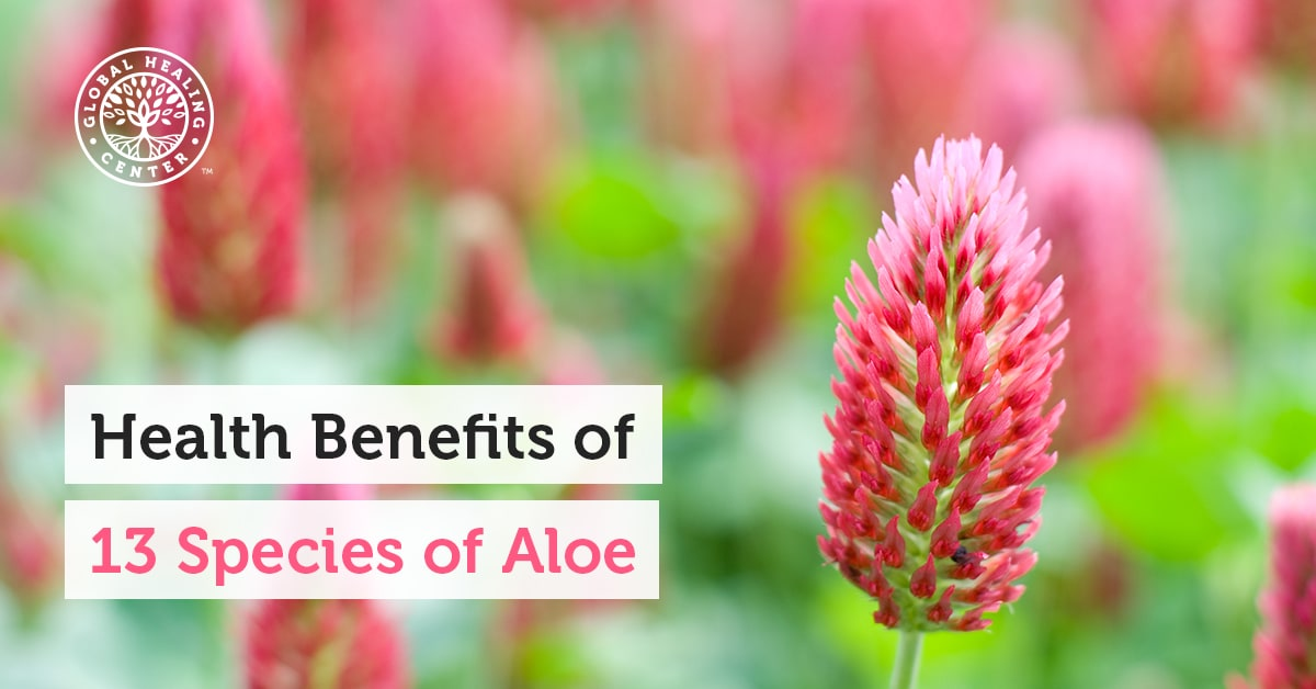 Learn How These 13 Aloe Plants Can Benefit Your Health