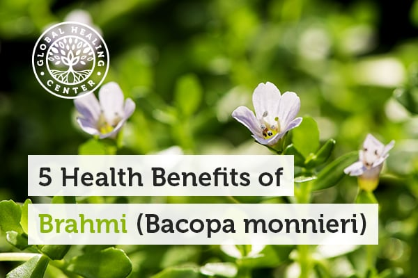 Stress reduction is one of the health benefits of Brahmi bacopa monnieri.