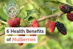 Antioxidants are one of many health benefits of mulberries.
