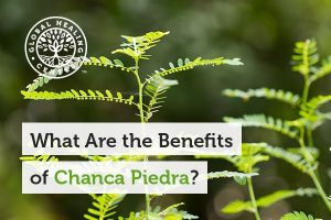 Chanca Piedra helps support liver health.
