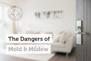 Mold can be found in common places like homes and offices.