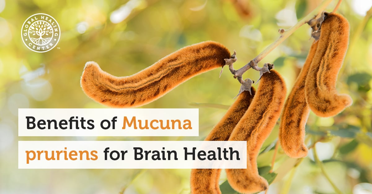 The Benefits Of Mucuna Pruriens For Brain Health