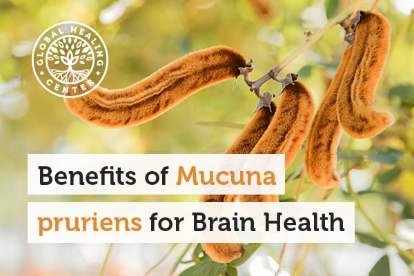 Mucuna pruriens has a rich history in promoting mental health.
