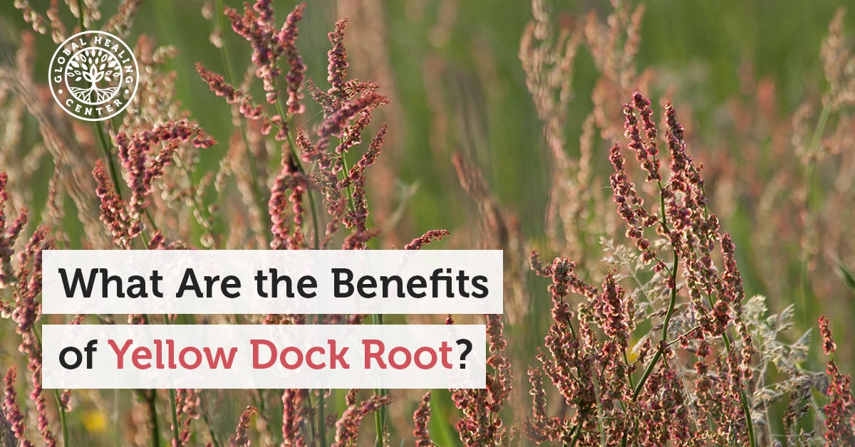 What Are The Benefits Of Yellow Dock Root