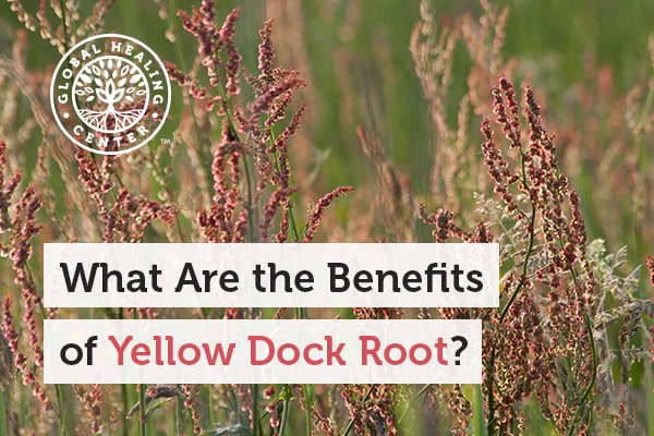 Yellow dock root is known to reduce oxidative stress.