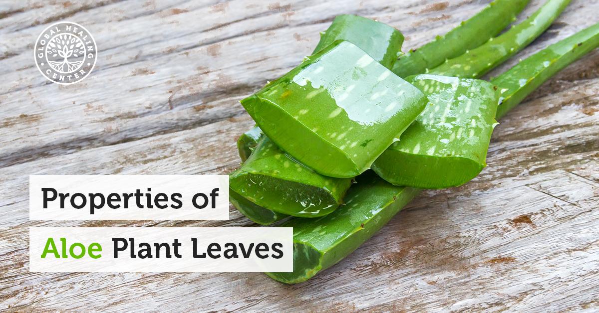 Properties Of Aloe Plants Inner Leaf Versus Outer Leaf