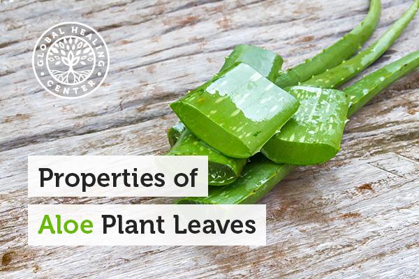Aloe plant possesses the highest level of acemannan.