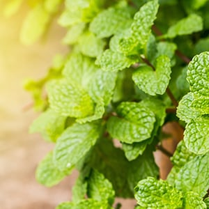The 7 Best Herbs for Bad Breath