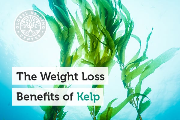 Kelp is part of the weight loss plan because it supports a healthy metabolism.